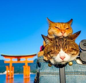 Veľká mačička pery fotky
