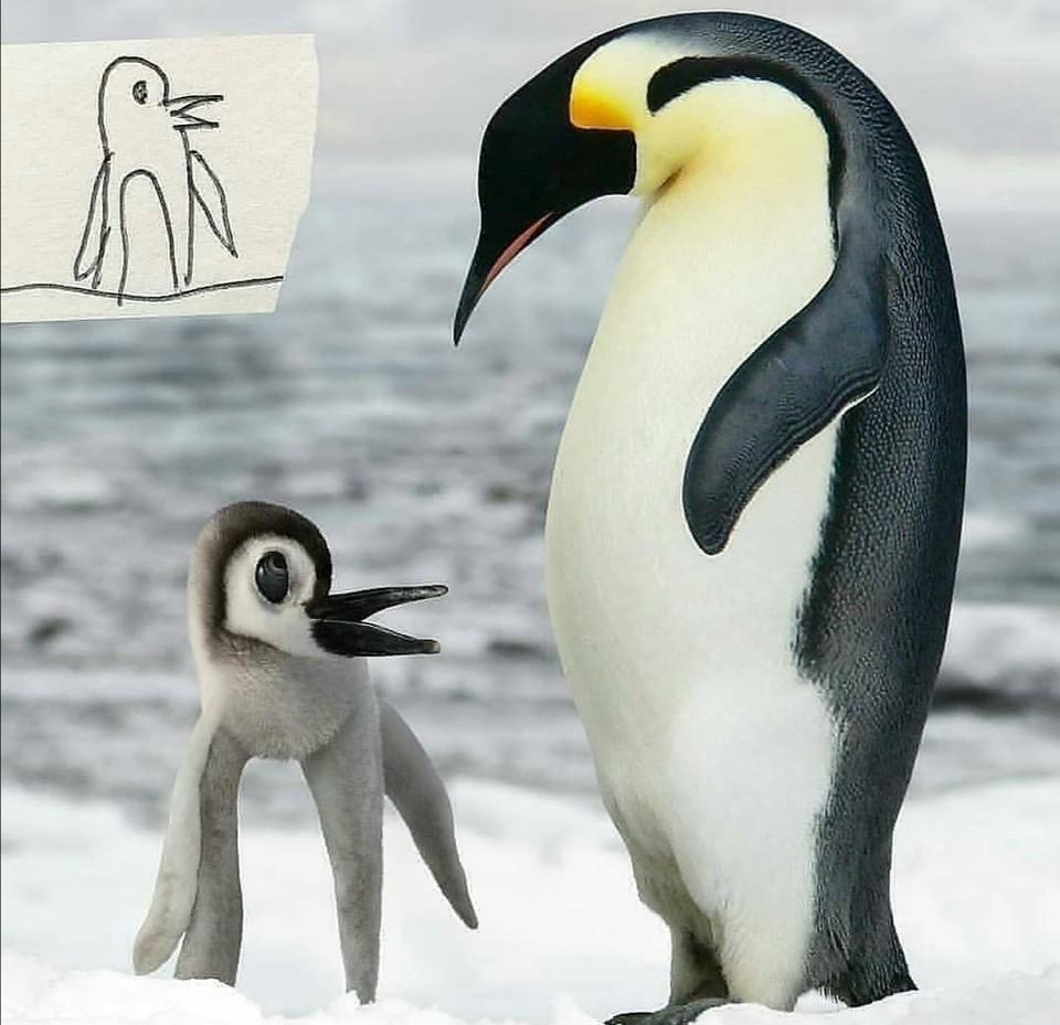 Zvieratá v detskom ponímaní (10)
