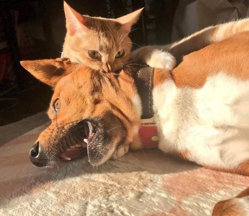 Domáce zvieratká v akcii