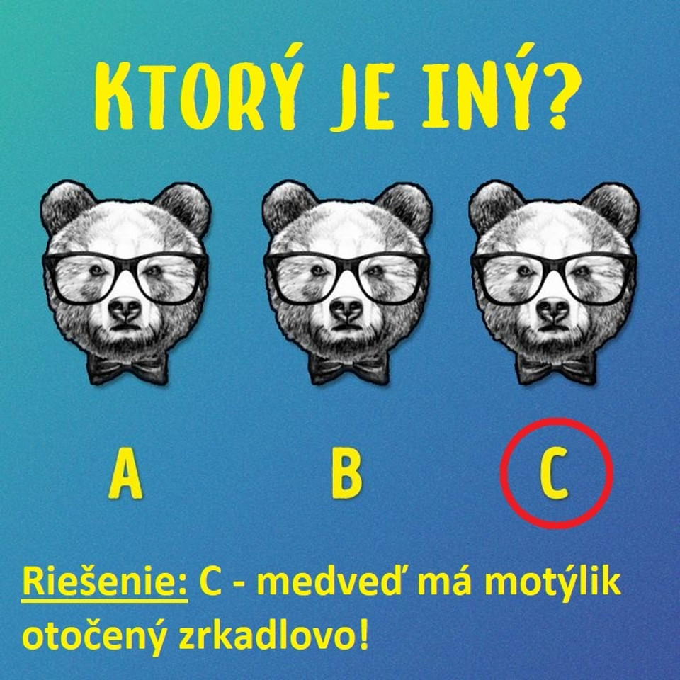 Medvede - riešenie