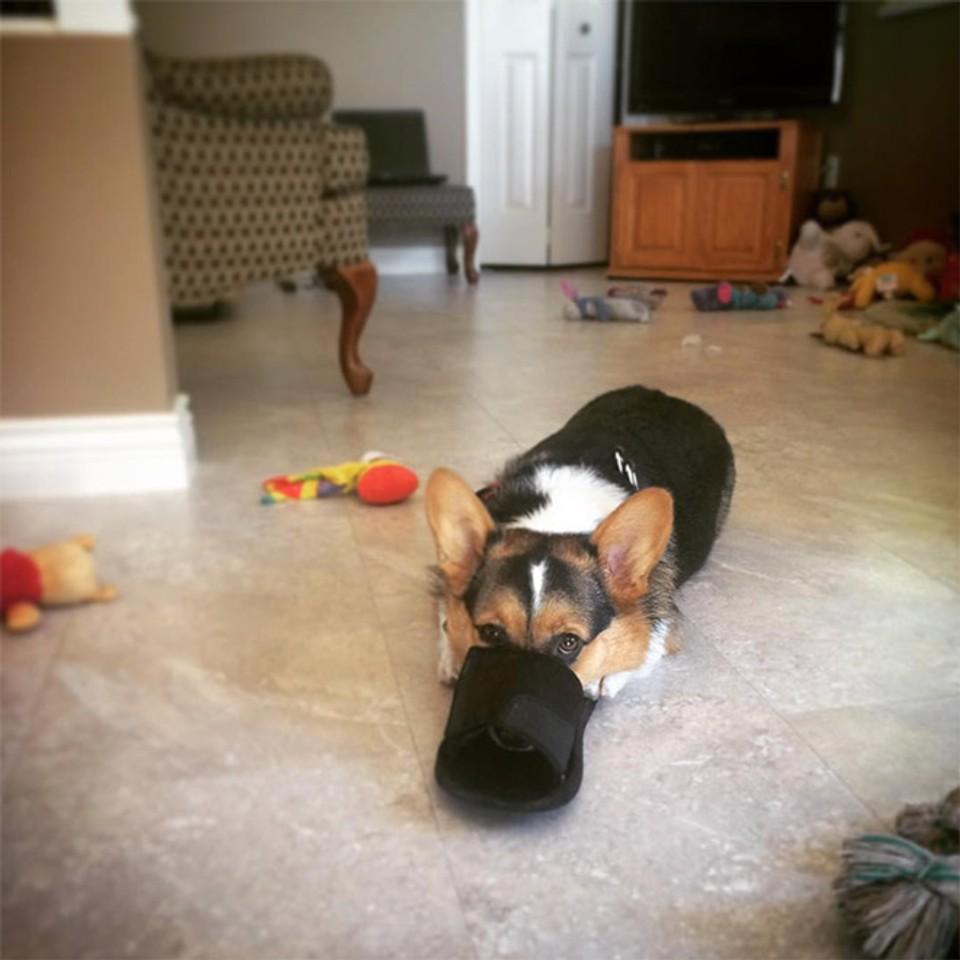 Nové psie plemeno