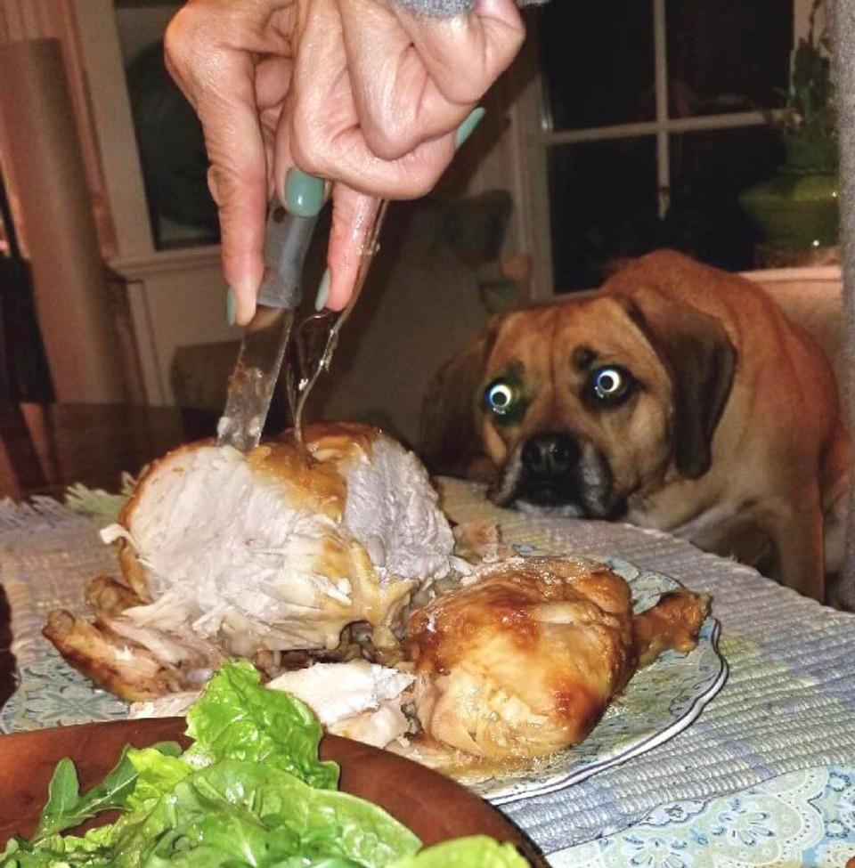 Psia láska k jedlu