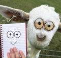 Zvieratá v detskom ponímaní (5)