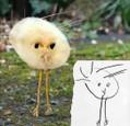 Zvieratá v detskom ponímaní (6)