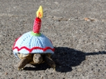 Zimná móda korytnačiek