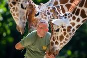 Žirafia láska