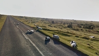 Zvieratá na Google Street View